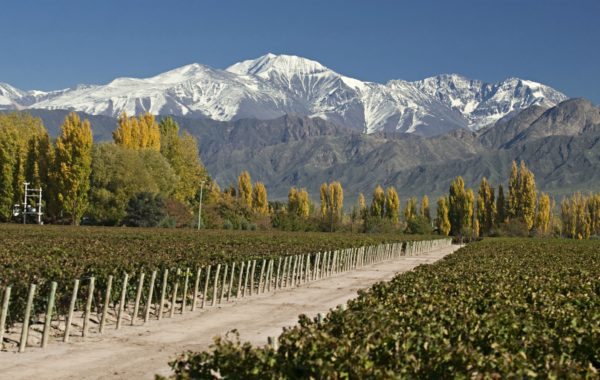 Mendoza Private Wine Tour