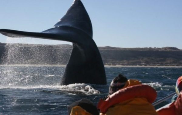 Puerto Madryn 3 Days & 2 Nights Tour