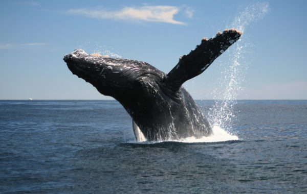 Puerto Madryn 4 Days & 3 Nights Tour